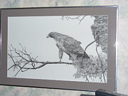Etc. Drawings - Red Tail Hawk by Al  Brown