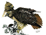 Red Tail Hawk Originals - Red Tail Hawk by Douglas Hawks