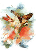 Red Tail Hawk Pastels - Red Tail Hawk by Janice Lawrence