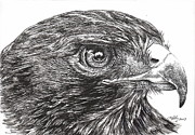 Bird Drawings Posters - Red Tail Hawk Poster by Kathleen Kelly Thompson