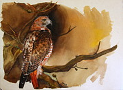 Red Tail Hawk Paintings - Red Tail Hawk by Steven  Nakamura