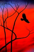 Red Tail Hawk Paintings - Red Tail Red Sky III by John Sparks