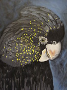 Karen Wiseman - Red-tailed Black Cocky 2
