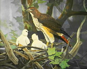 Bird Of Prey Art Paintings - Red-Tailed Hawk and Chicks by Jack Bolin