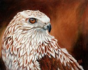 Red-tailed Hawk Paintings - Red Tailed Hawk by Barbara Ann Robertson