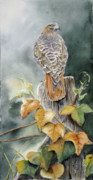 Red-tailed Hawk Paintings - Red-Tailed Hawk Lookout by Patricia Pushaw