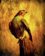 Wingsdomain Digital Art Metal Prints - Red Tailed Hawk . texture . 40D10167 Metal Print by Wingsdomain Art and Photography