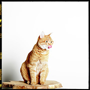 Anticipation Photo Posters - Red Tomcat Sitting On Wooden Table Poster by MarcelTB