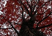 Autumn Art Posters - Red Tree Poster by David Lee Thompson