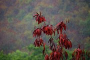 Field Digital Art Originals - Red Tree in the Rain by Michael Thomas
