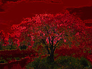 Stuart Turnbull Metal Prints - Red tree Metal Print by Stuart Turnbull