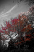 2009 Digital Art Prints - Red Trees Print by Craig Perry-Ollila