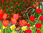 Azalea Bush Paintings - Red Tulips 2 by Susanna  Katherine