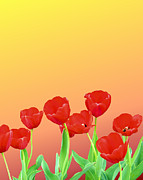 Red Tulips Print by Kristin Elmquist