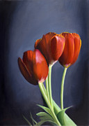 Naturalistic Framed Prints - Red Tulips Framed Print by Tzvi Abraham