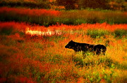 Country Scene Photos - Red Twilight by Emily Stauring