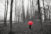 Tree Allee Framed Prints - Red umbrella in an allee Framed Print by Mats Silvan