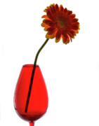 Gerbera Originals - Red Vase by Terence Davis