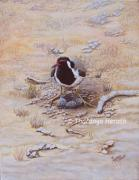 Sri Lankan Artist Paintings - Red-wattled Lapwing by Tharanga Herath