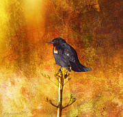 Bird Digital Art Prints - Red-Winged Blackbird Abstract Print by J Larry Walker