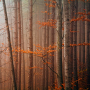 Beech Prints - Red Wood Print by Evgeni Dinev