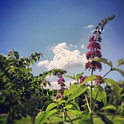 Clouds Art - Redbud, Clouds And Butterfly Bush by Amber Flowers