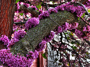 Blossoming Originals - Redbud Festoon by William Fields