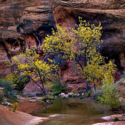 Stream Prints - RedCliffs Autumn Print by Jim Speth