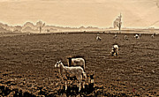 Lambing Metal Prints - Redeemed by the Lamb Metal Print by Mindy Newman