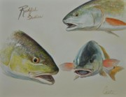 Nature Study Paintings - Redfish Studies by Calvin Carter