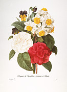 Camellia Japonica Photo Framed Prints - Redoute: Bouquet, 1833 Framed Print by Granger