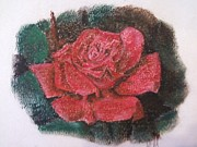 Red Rose Pastels - Redrose by Olga Malave-Mercado