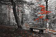 Fall Photographs Prints - Reds in the Woods Print by Aimelle