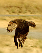 Reservoir Prints - Redtail Flight Print by Donna Blackhall