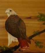 Red Tail Hawk Paintings - Redtail by Jena Gillam