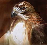 Red-tailed Hawk Paintings - RedTailed Hawk Portrait by Steve Goad