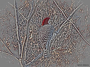 Woodpecker Mixed Media - Redtop Woodpecker  by Debra     Vatalaro