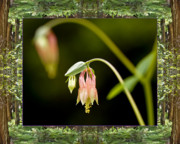 Healing Metal Prints - Redwood Columbine Metal Print by Bell And Todd
