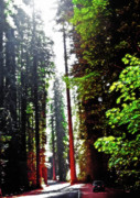 Huge Digital Art Prints - Redwood Forest 5 Print by Steve Ohlsen