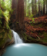 Lush Green Posters - Redwood forest waterfall Poster by Matt Tilghman