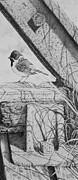 Rail Drawings - Reed bunting by Paul Parsons