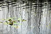 Reeds And Reflections Print by Dave Fleetham - Printscapes