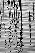 Silvery Posters - Reeds and Reflections No. 2 Poster by Dave Gordon