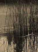 By Barbara St. Jean Framed Prints - Reeds Framed Print by Barbara St Jean