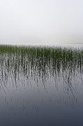 Argyll And Bute Prints - Reeds in the mist Print by Gary Eason