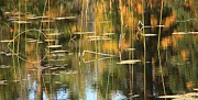 Fall Scenes Photo Originals - Reeds by Roland Stanke