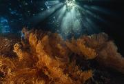 Raja Ampat Photos - Reef Meets Rain Forest In The Passage by David Doubilet