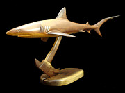 Sharks Sculpture Metal Prints - Reef Shark Metal Print by Kjell Vistnes