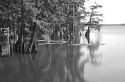 Cypress Prints - Reelfoot Lake 2206 BW Print by James Richardson