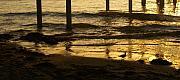 Linda Knorr Shafer - Reflecting Gold